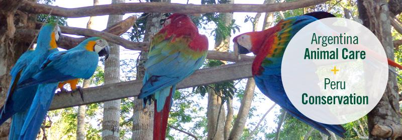 Parrots cared for by Projects Abroad volunteers at the Conservation project, Taricaya, Peru