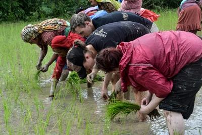 Volunteers helping in a paddy field in Nepal