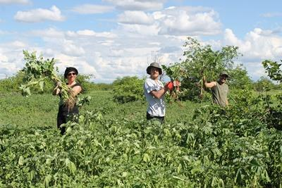 Projects Abroad conservation volunteers help to remove alien plants at their placement in Botswana