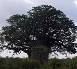 Tree Species list