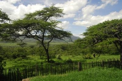 Conservation in Kenya