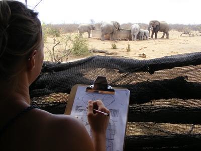 Conservation volunteering