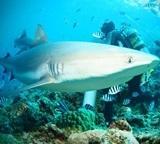 Species List – Fish, Sharks, Turtles & Rays