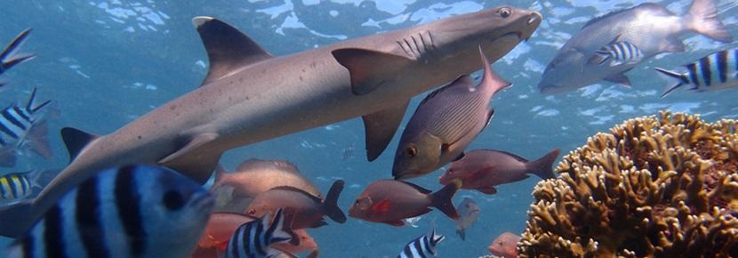 Projects Abroad Shark Conservation in Fiji