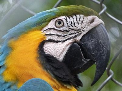 Gap Year Rainforest Conservation in Peru