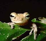 Amphibia List