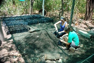 Reforestation in Costa Rica