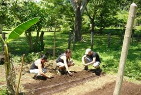 Conservation volunteers plant seedlings in the rainforest in Costa Rica.