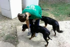 An Animal Care volunteer assists with caring for dogs at an animal clinic and shelter at her placement in Jamaica.